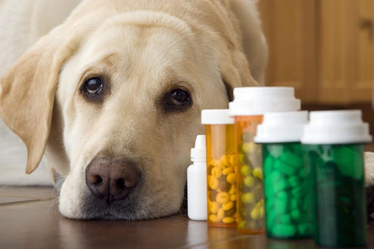 dog arthritis medication facts in online